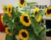 Sonnenblumen für die Deko